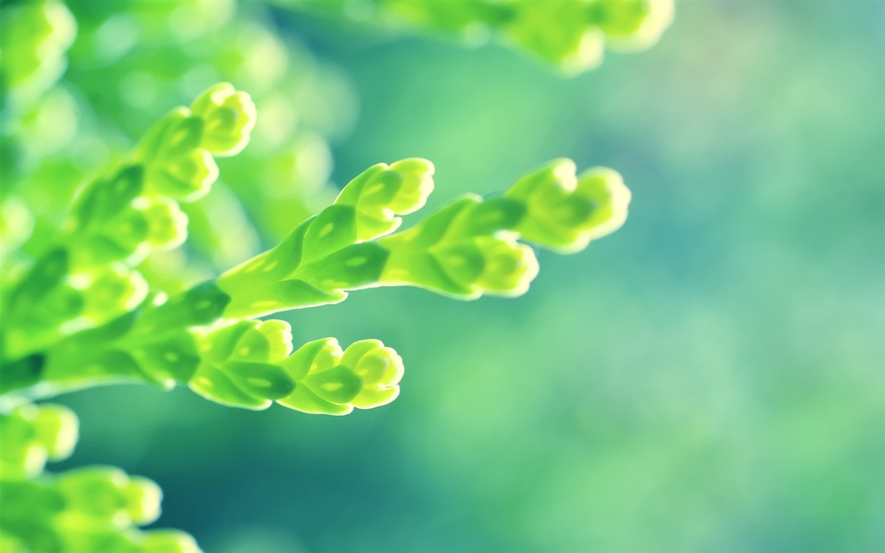 Fresh and seductive green shoots close-up wallpaper - 1280x800