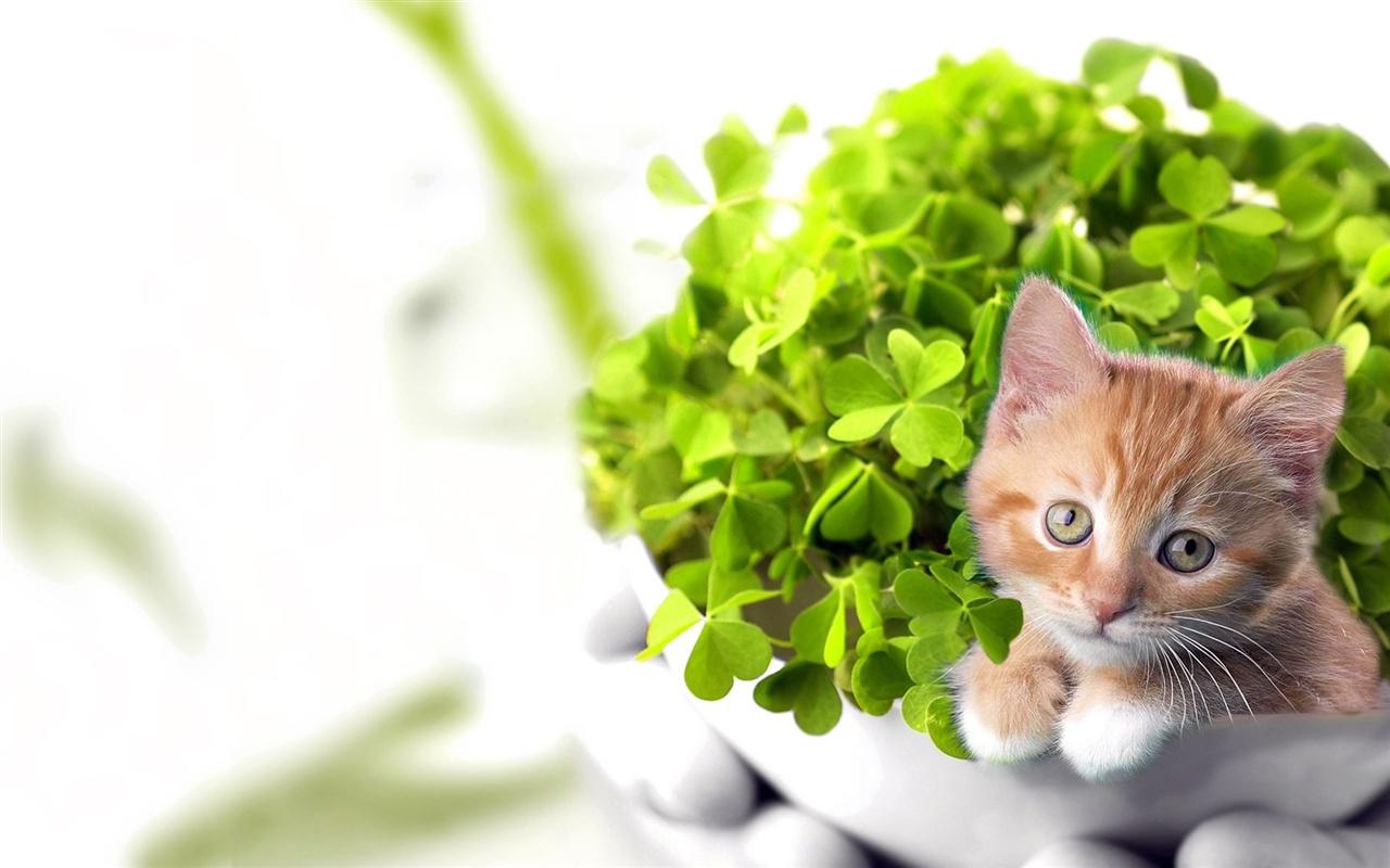 природа животные кот котенок рыжий nature animals cat kitten red скачать