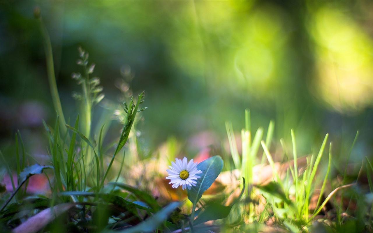 grass macro photography - photo #40