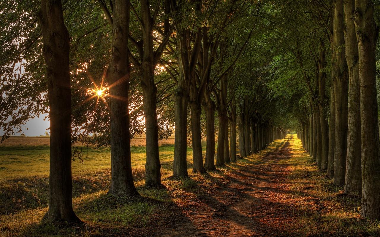 林荫大道,阳光,绿树成荫,道路 壁纸图片