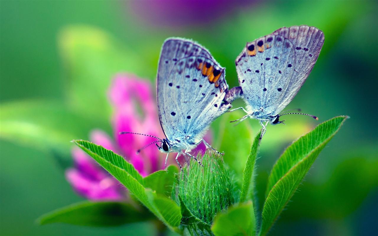 1280 x 800 butterfly wallpaper - photo #17