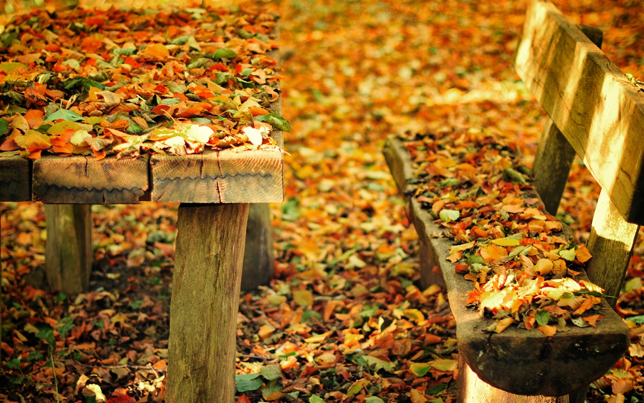autumn leaves on bench - photo #15