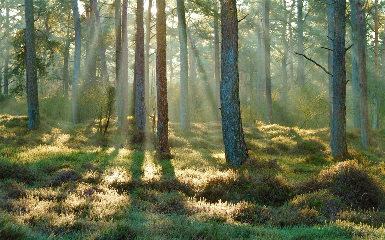 wallpaper spring forest grass sunlight morning