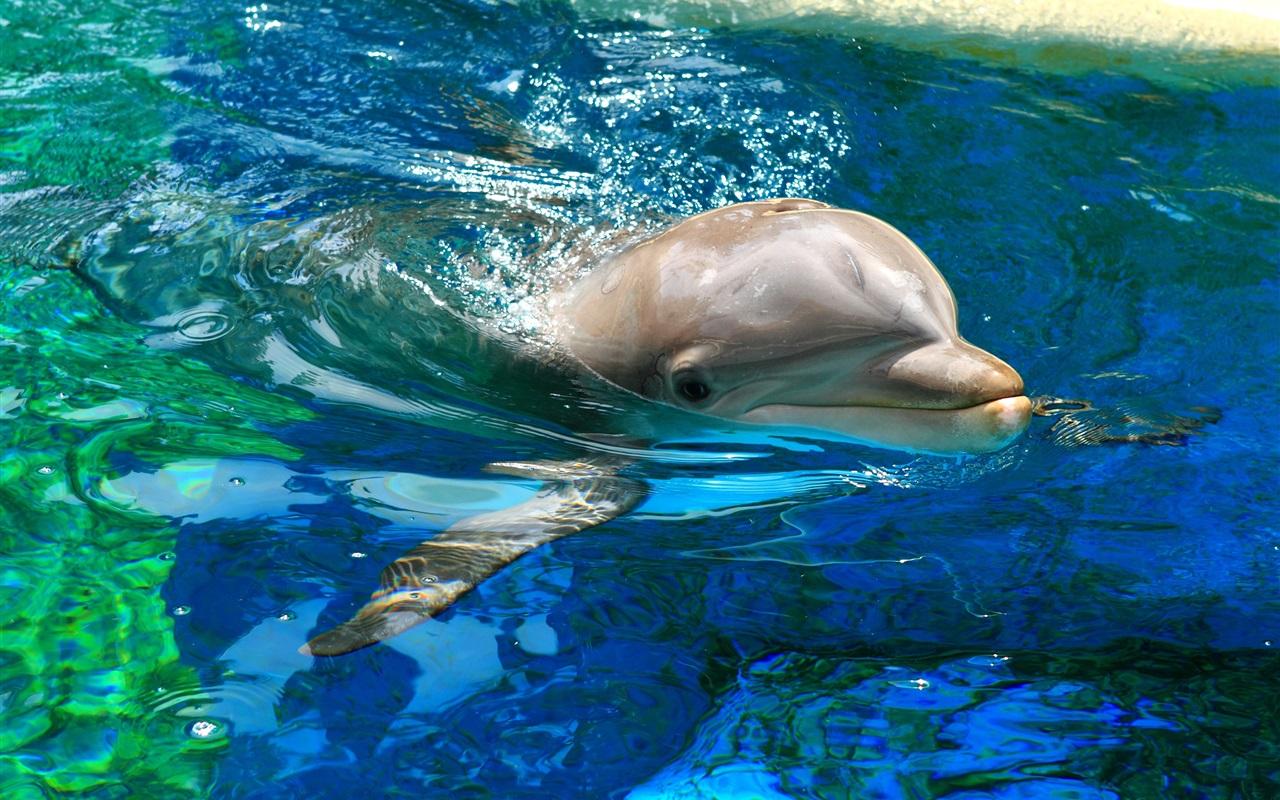 документы фотографии дельфинов в хорошем качестве много коттеджей домов