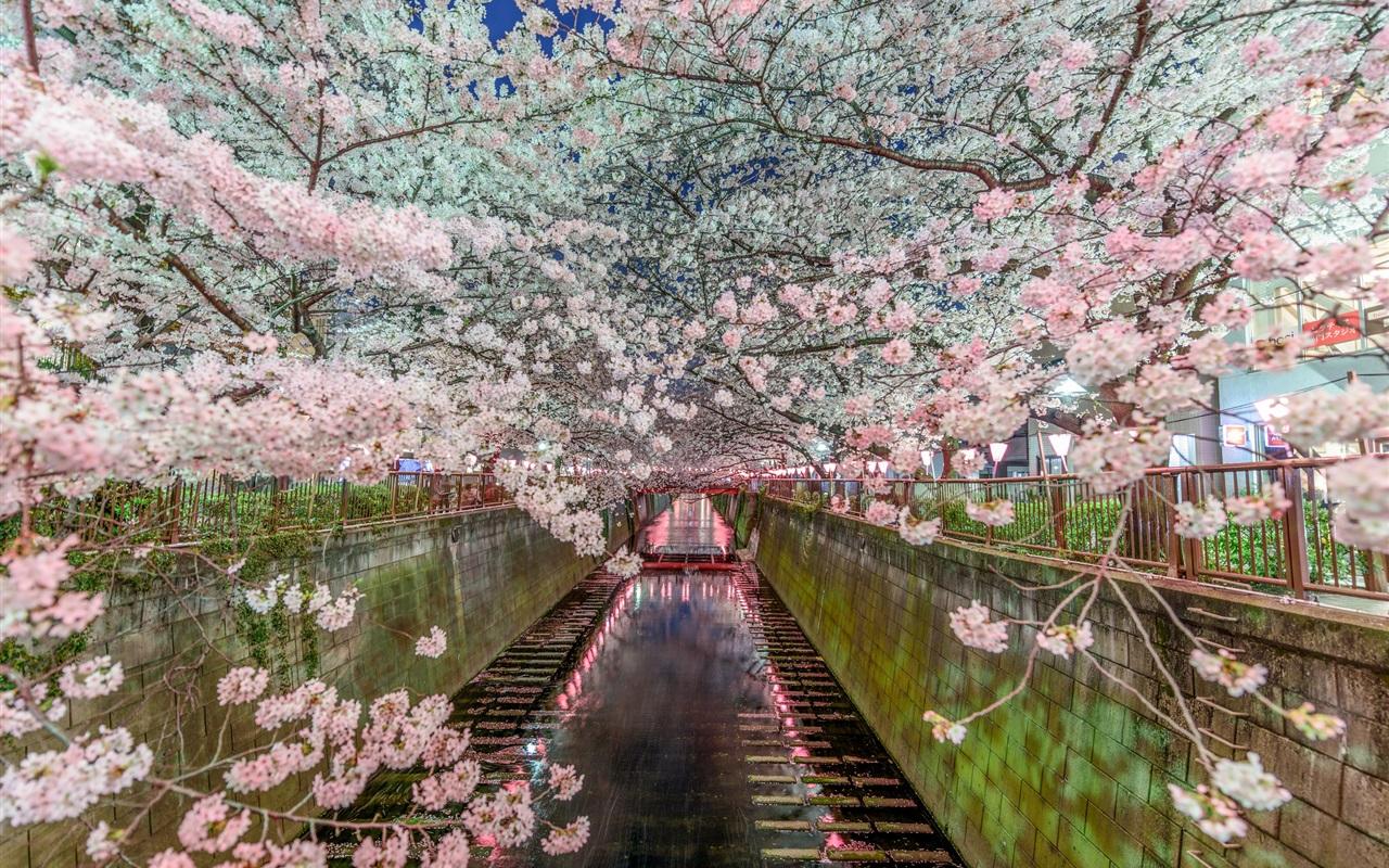 обои для рабочего стола весна япония № 60178 бесплатно