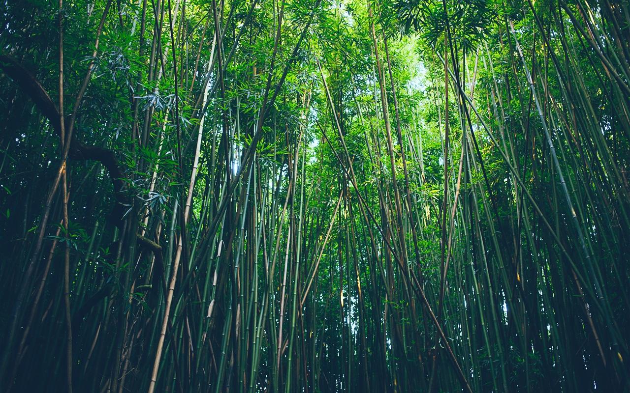 壁紙 竹の森 自然 3840x2160 Uhd 4k 無料のデスクトップの背景 画像