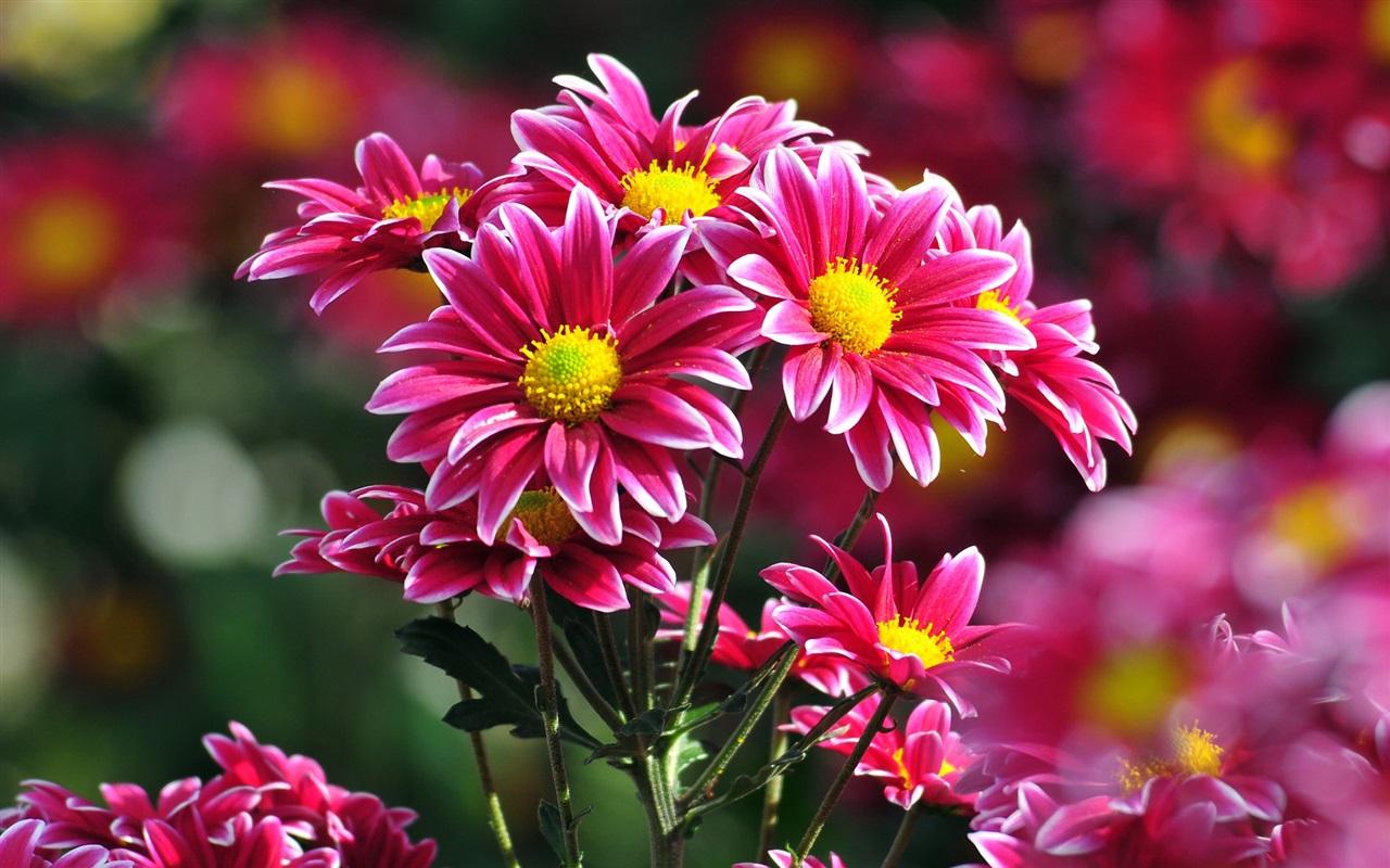 Красивые фото цветов отличного качества
