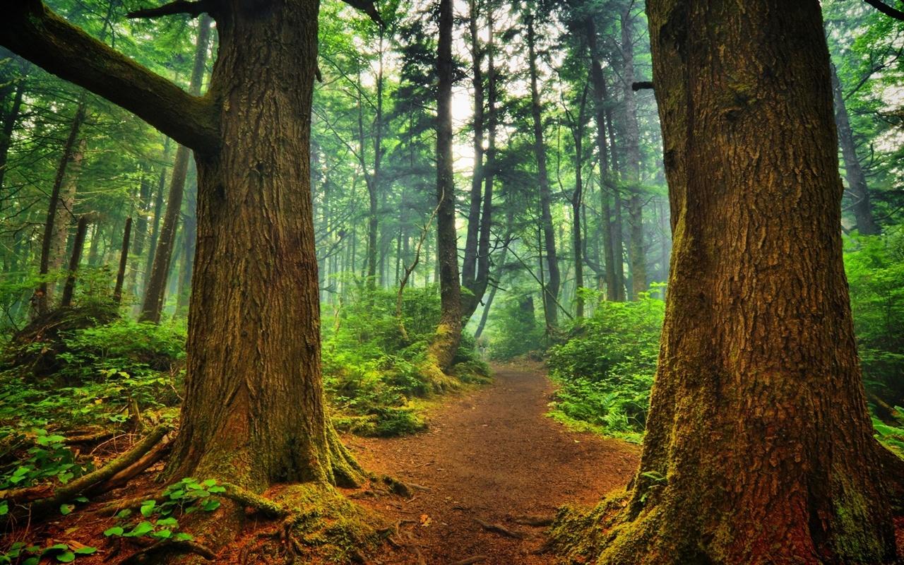 夏天的森林,树木,路径 壁纸图片