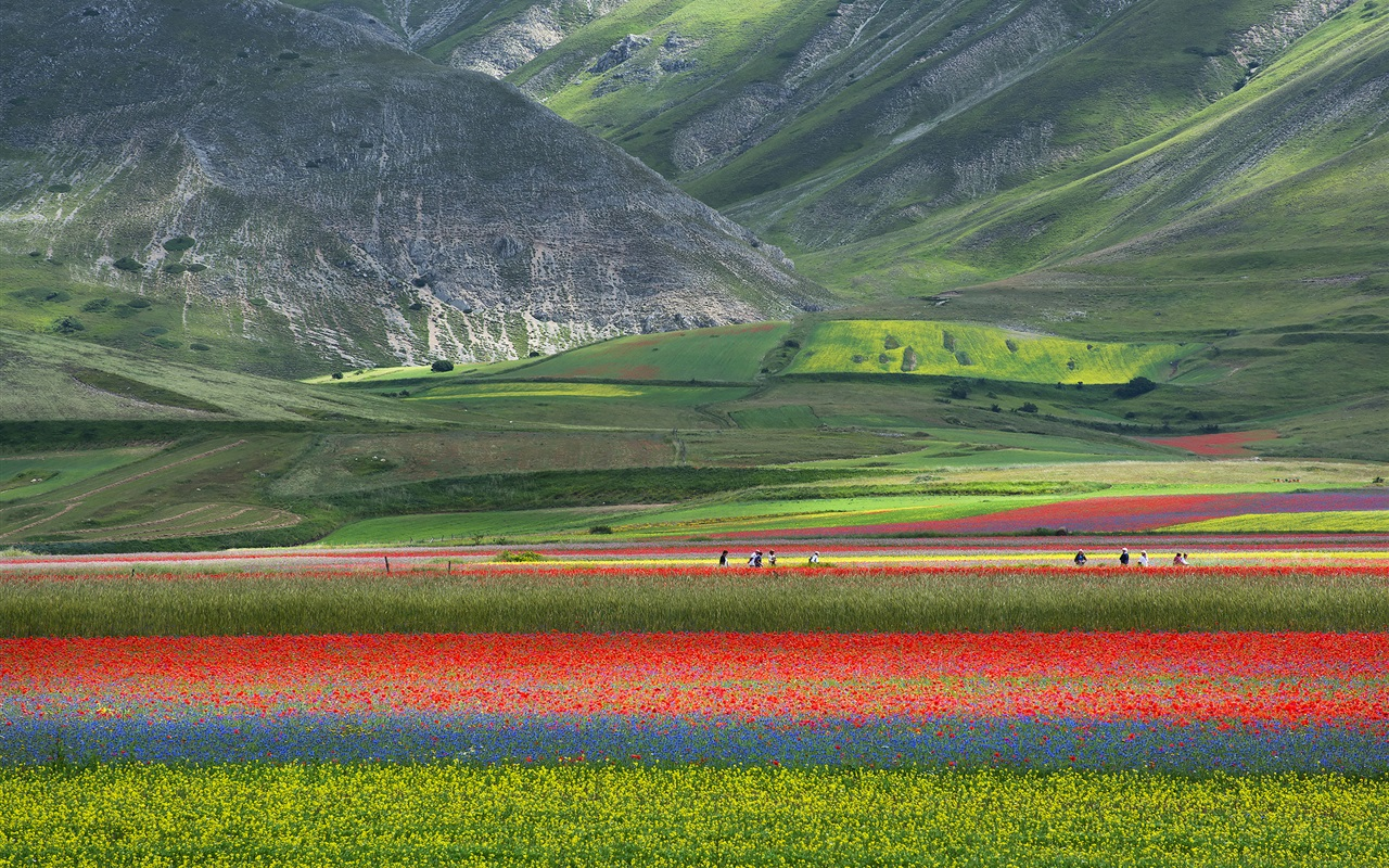 Beautiful nature landscape field flowers mountains - Wallpapers 1280x800 nature ...