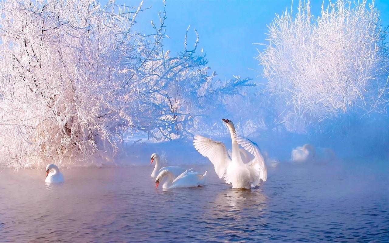 красивая живая картинка зимнего утра нашей