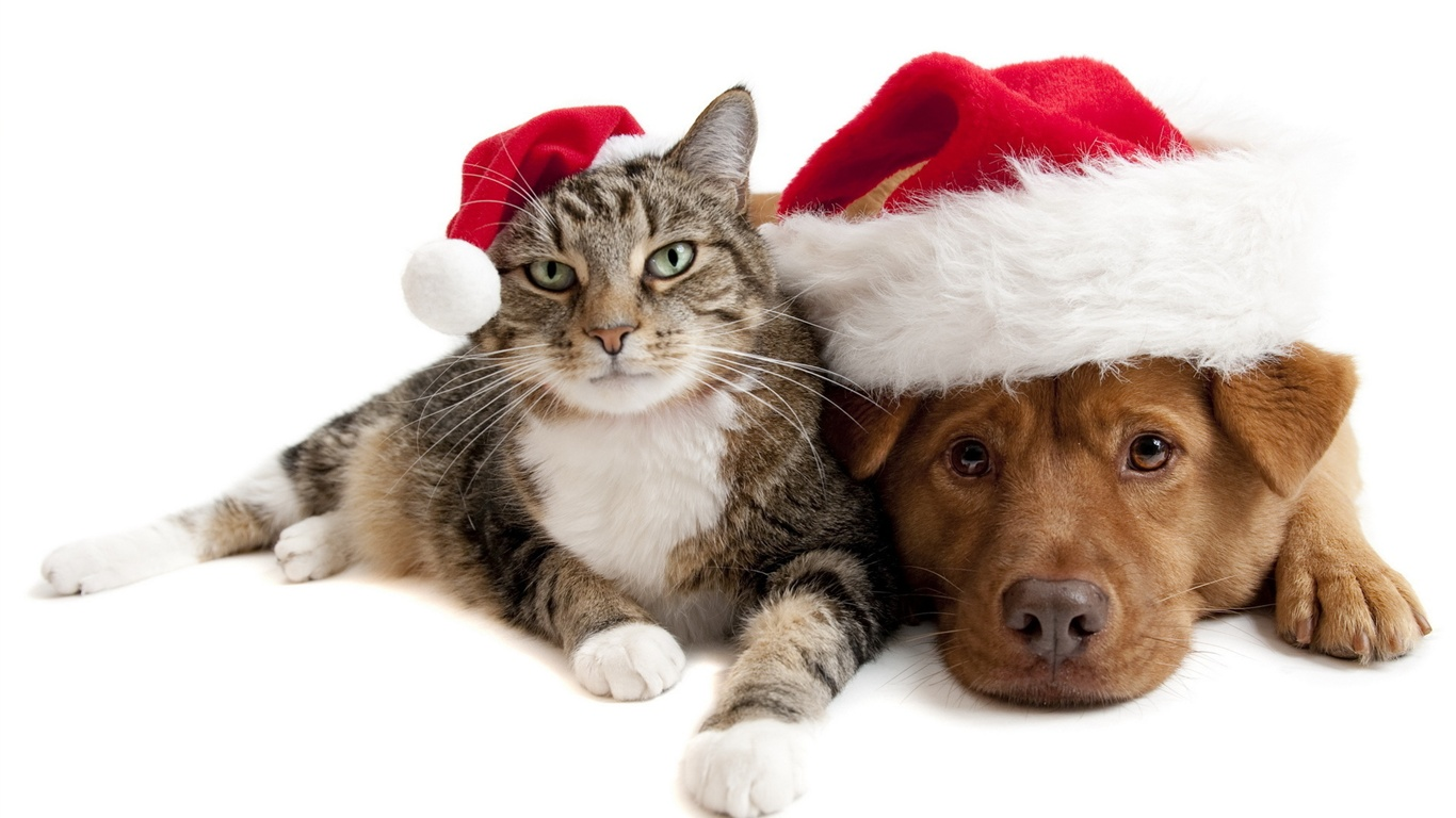 Christmas cat and dog wallpaper - 1366x768
