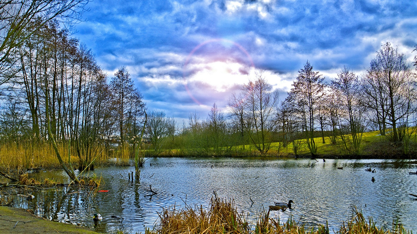 Ducks and lake scenery wallpaper - 1366x768