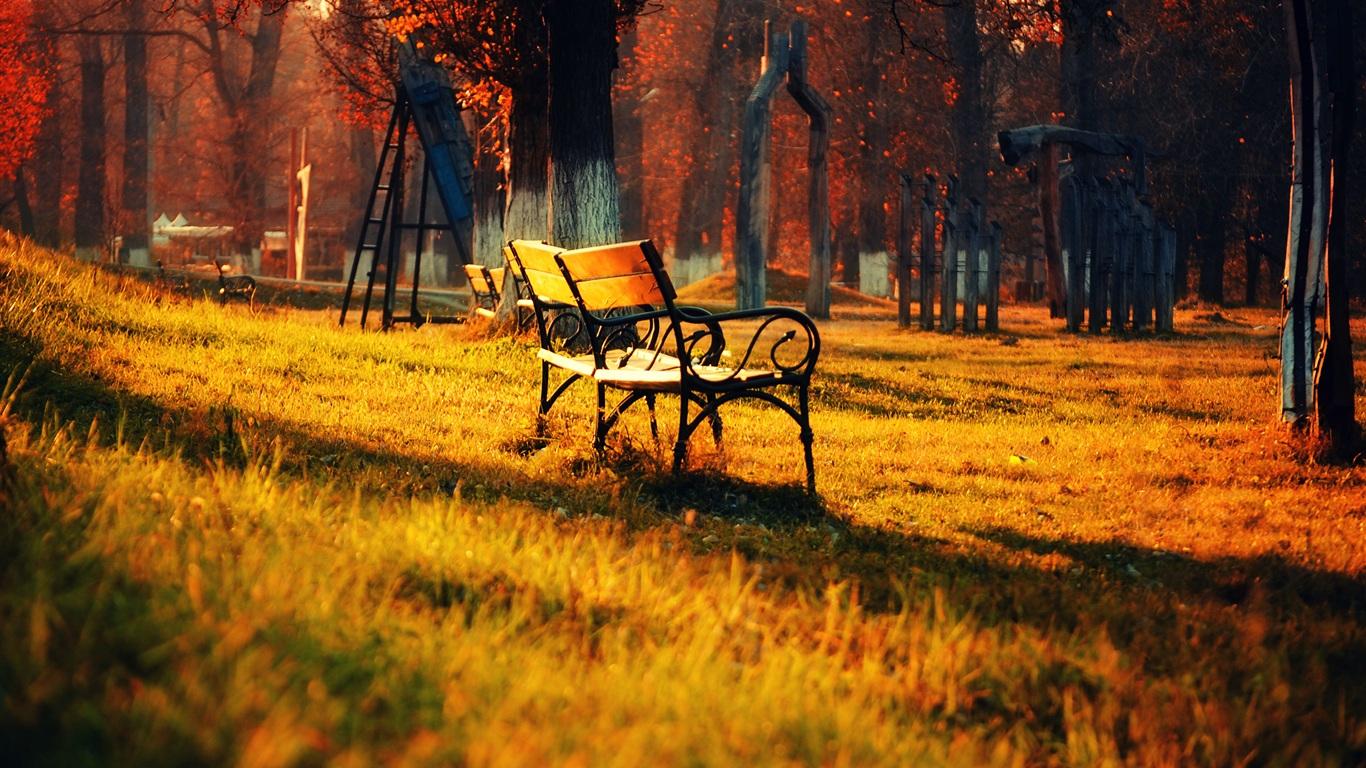 壁纸 金色秋天公园的自然风景,草地长椅阳光 2560x1600 Hd 高清壁纸 图片 照片