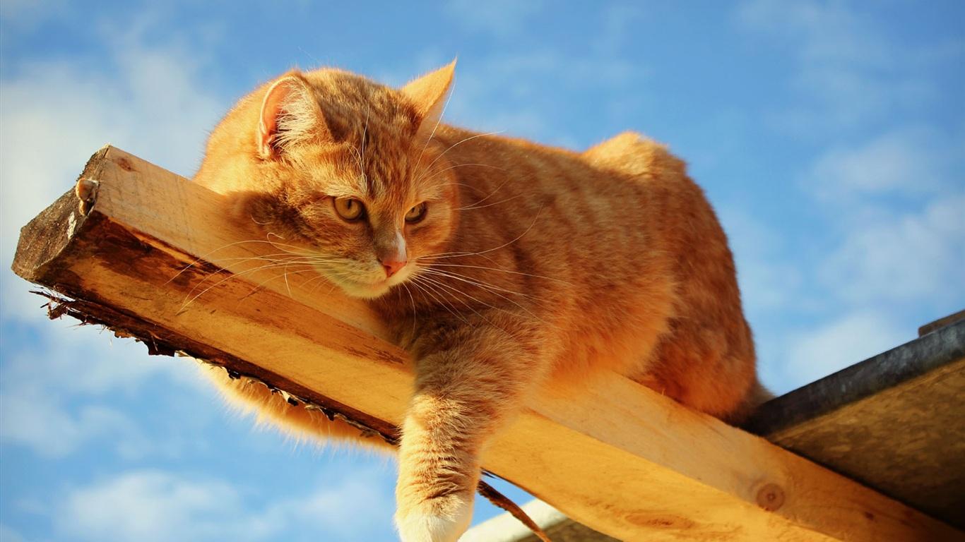 кот и елка обои на рабочий стол
