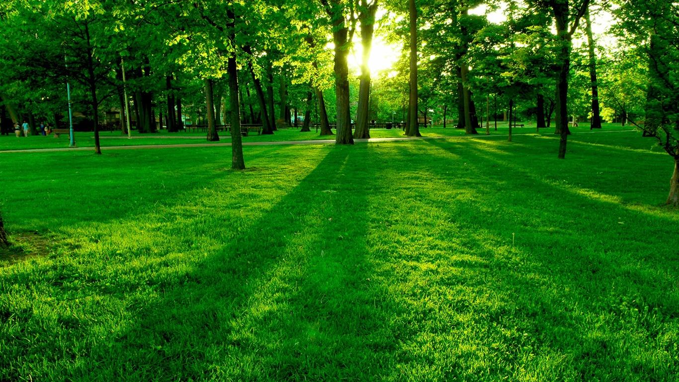 壁紙 朝の太陽 緑の木や草を停める 19x10 Hd 無料のデスクトップの背景 画像