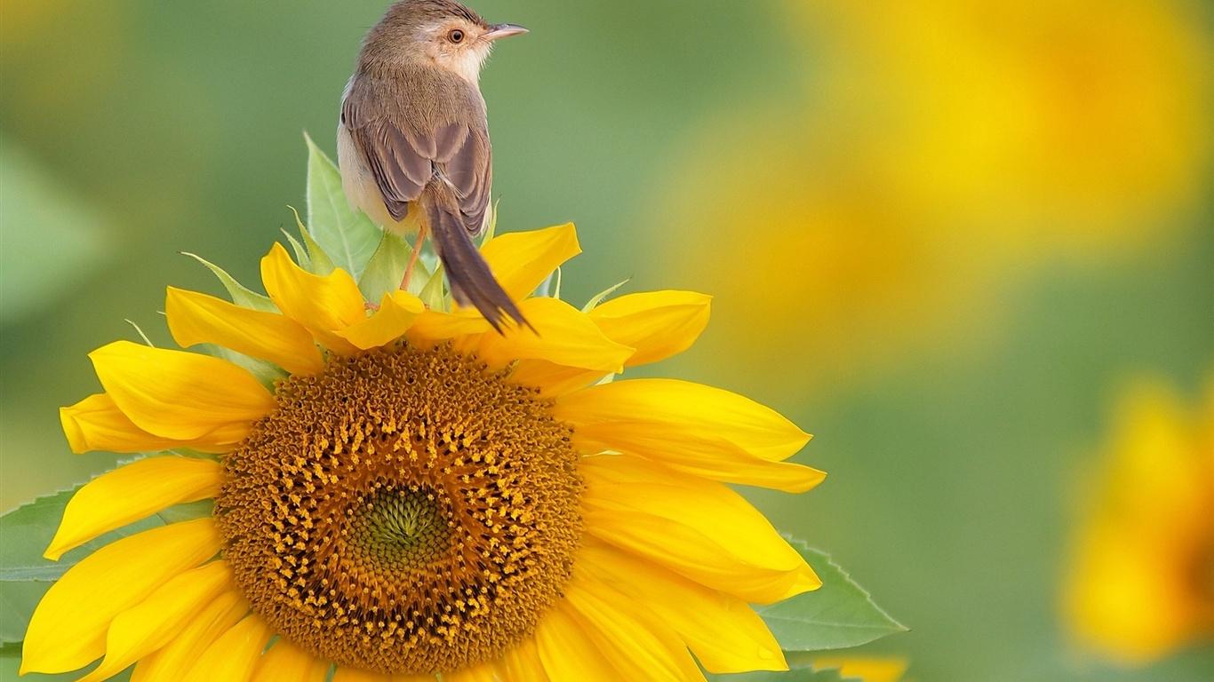 bee yourself photography 6