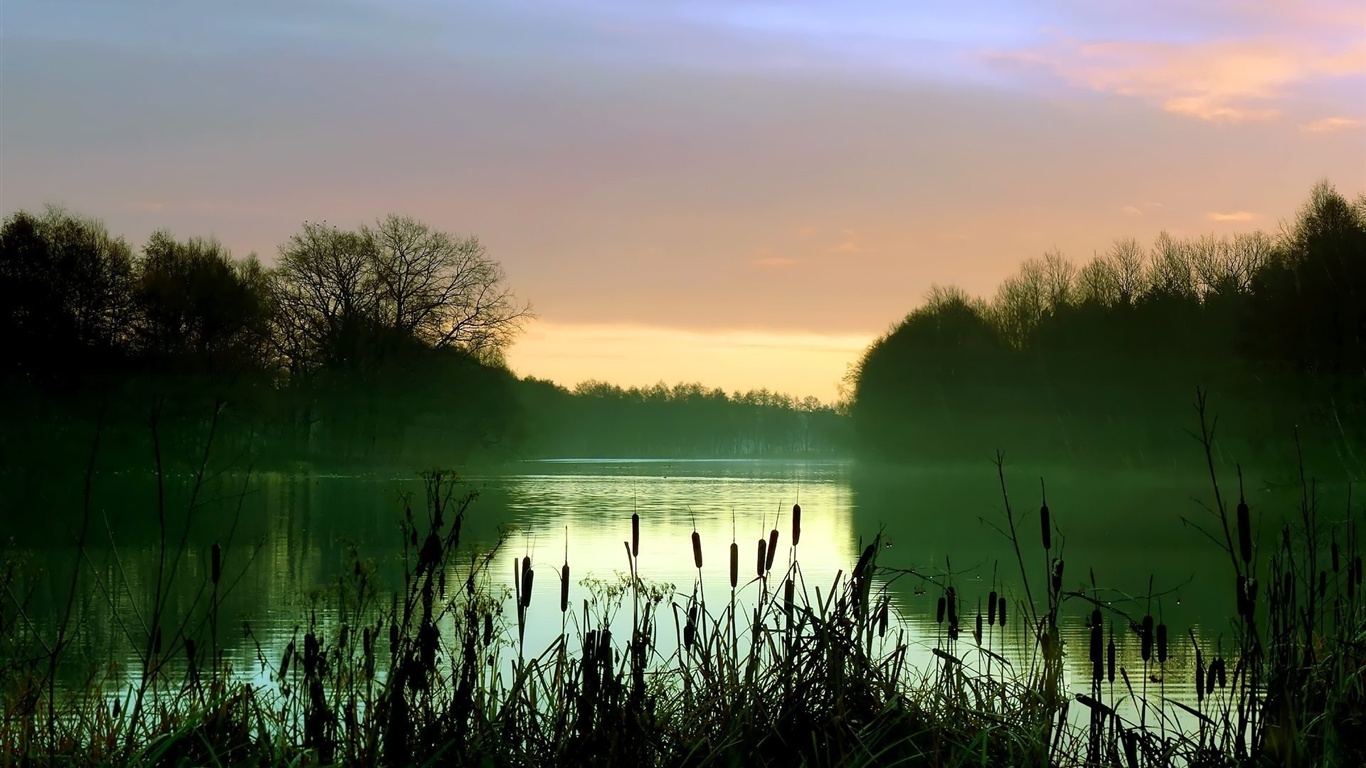 Early morning lake scenery, mist, reeds, trees wallpaper - 1366x768