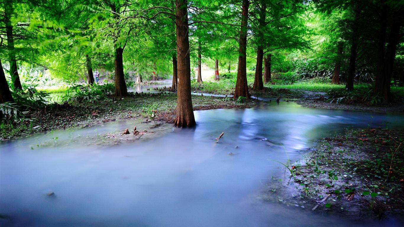 霧自然森林,樹木,水 壁紙 - 1366x768