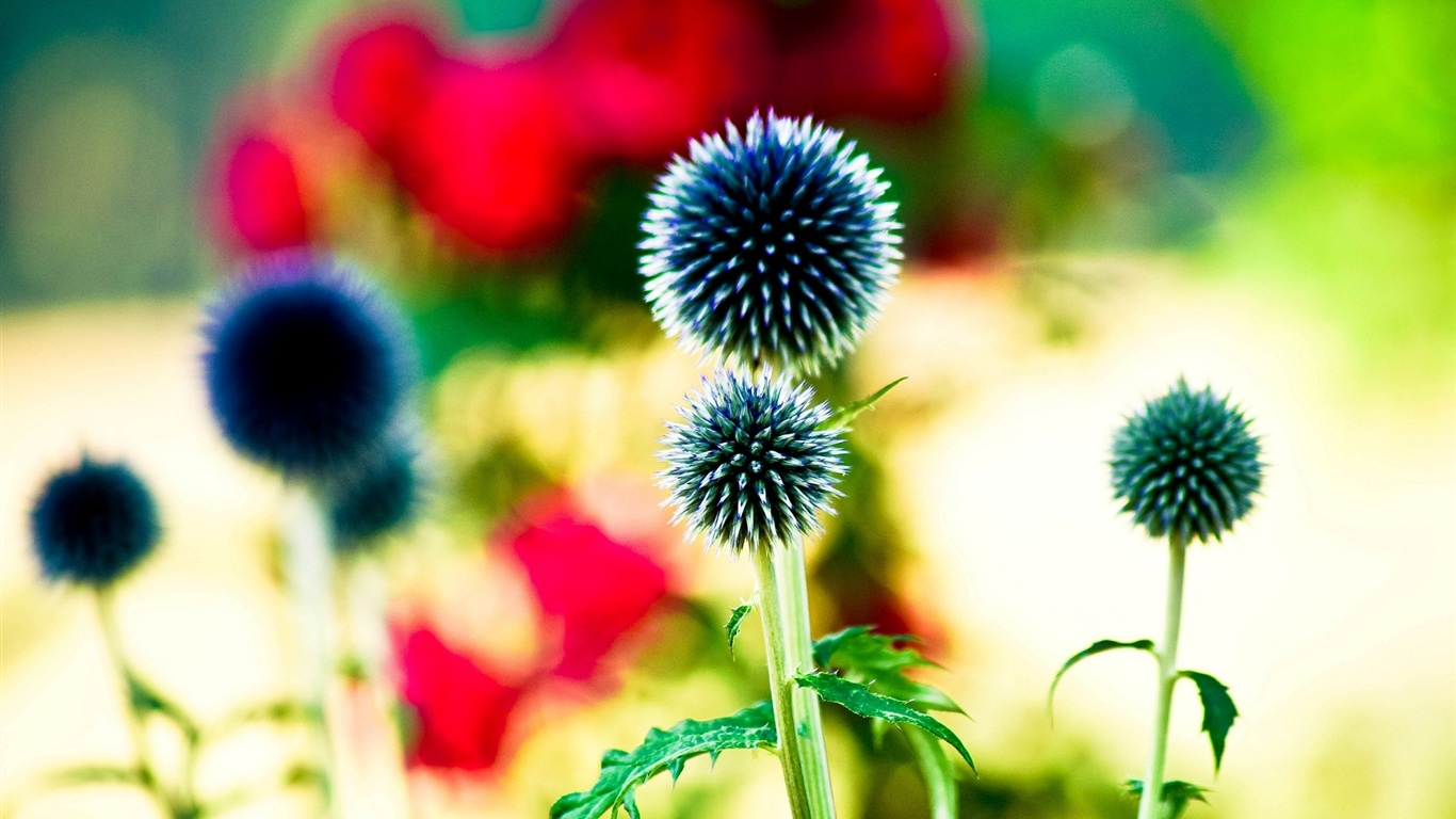 Wallpaper Like Ball Flowers Bokeh 1920x1200 Hd Picture Image