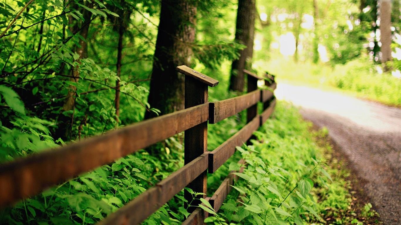 녹색 자연, 도로, 나무 울타리 배경 화면  1366x768 배경 화면 ...