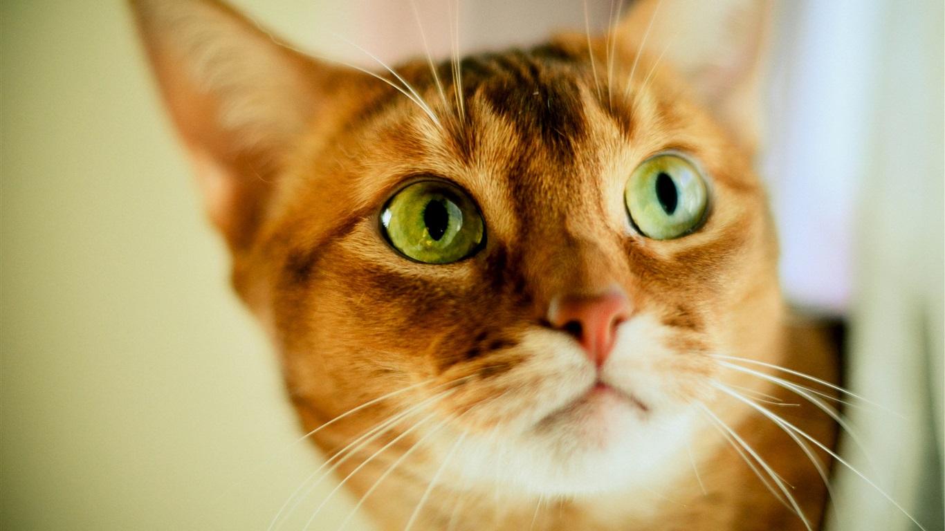 Orange And White Cat With Green Eyes White Cat With Orange Eyes
