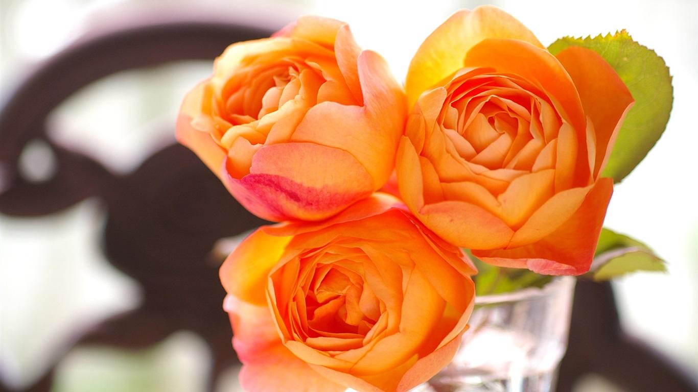 首页 鲜花 玫瑰 橙色玫瑰花,玻璃杯子 壁纸  当前尺寸:1366x768,你图片