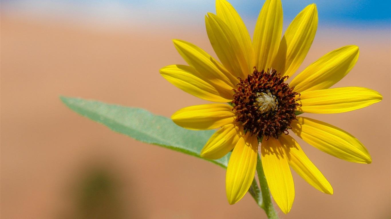 16 Luxury Pubg Wallpaper Iphone 6: 壁紙 黄色い花びらの花のクローズアップ 2560x1600 HD 無料の