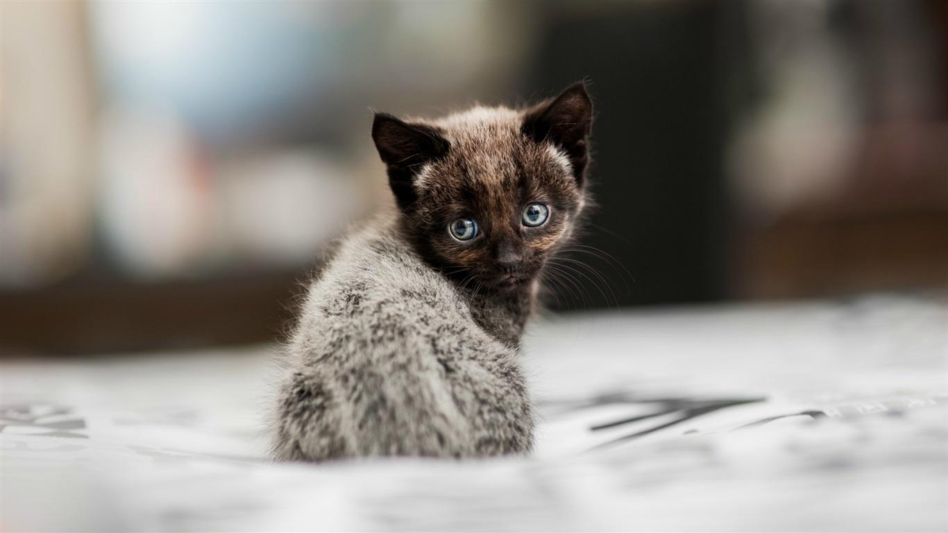壁紙 かわいい子猫を振り返る 19x1080 Full Hd 2k 無料のデスクトップの背景 画像