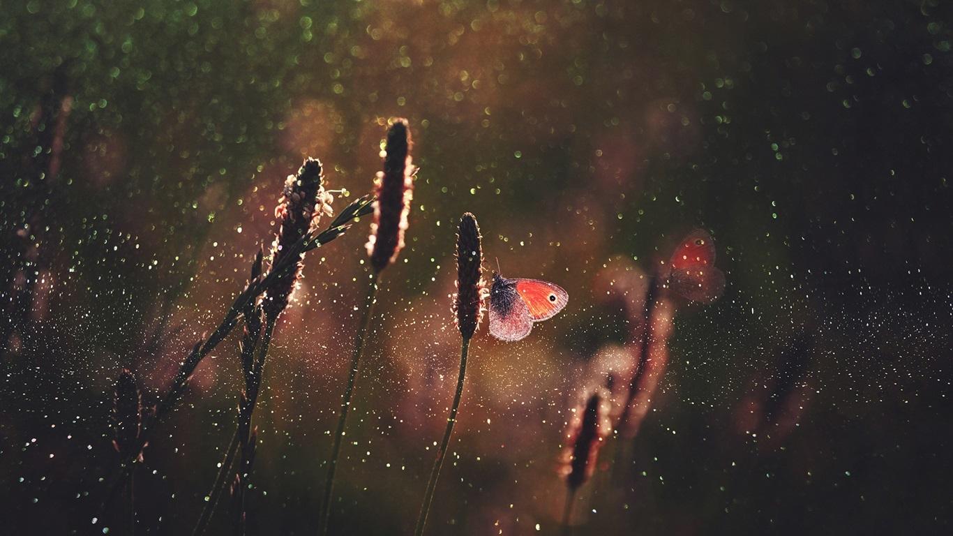 Grass Butterfly Rain Wallpaper 1366x768 Resolution