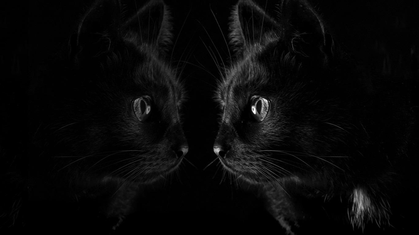 壁紙 ミラー 黒背景で黒猫見る 19x10 Hd 無料のデスクトップの背景 画像