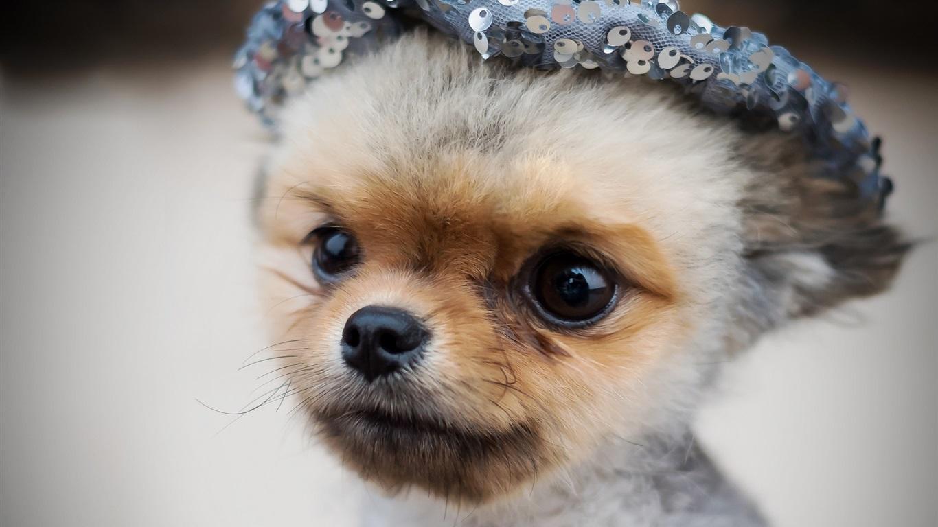 Tier Kochschürze Lustiger Hund Netter Welpe für Innen und Außen bereich