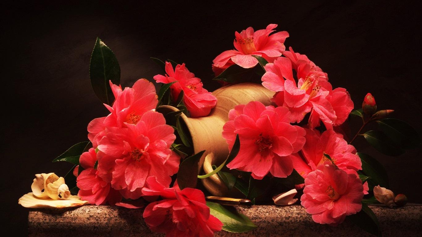 Rote Blumen, Kamelie, Vase 1920x1440 HD Hintergrundbilder