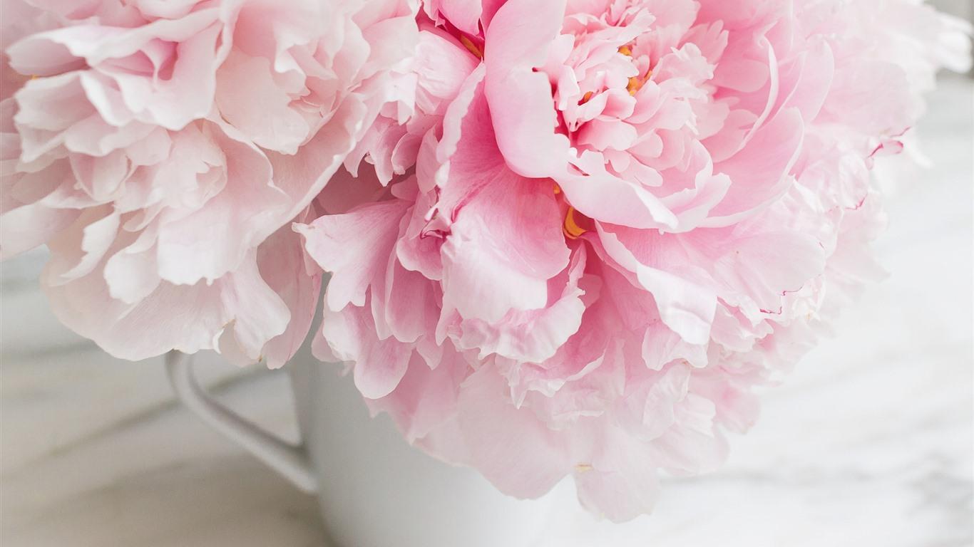 картинки бело розовых пионов на телефон для многих горожан
