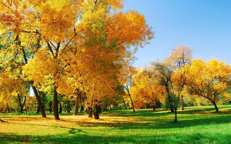 Золотая осень обои 1440x900 скачать обои
