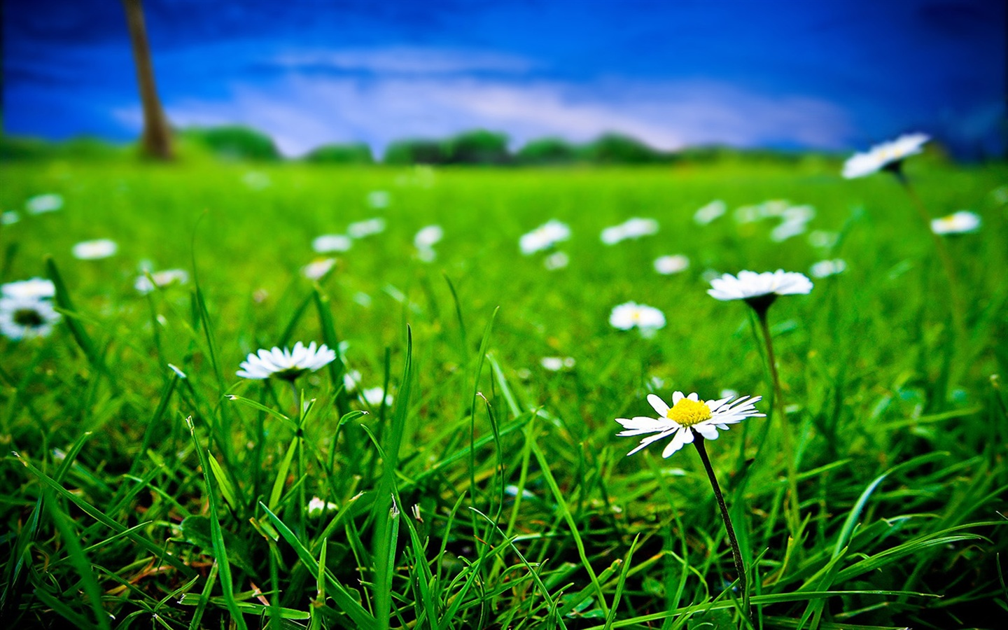 Download wallpaper 1440x900 green grass and white flowers for Green and white wallpaper