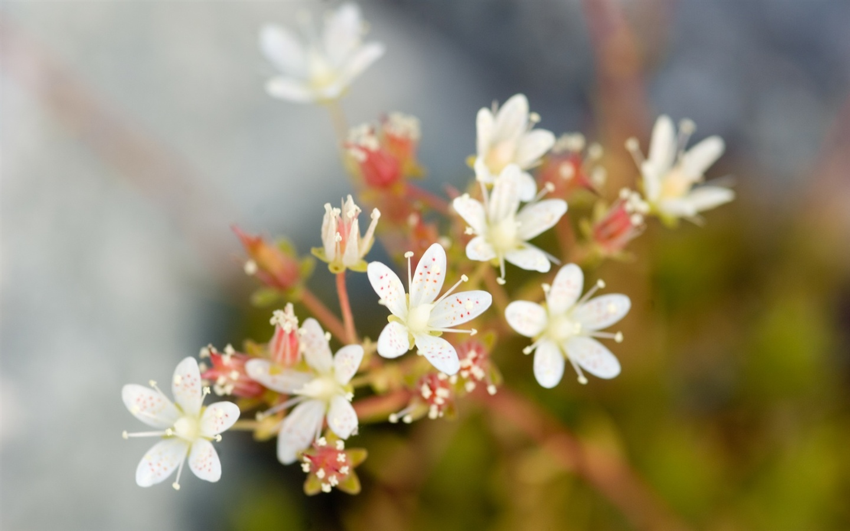 Macro White Flower Photography