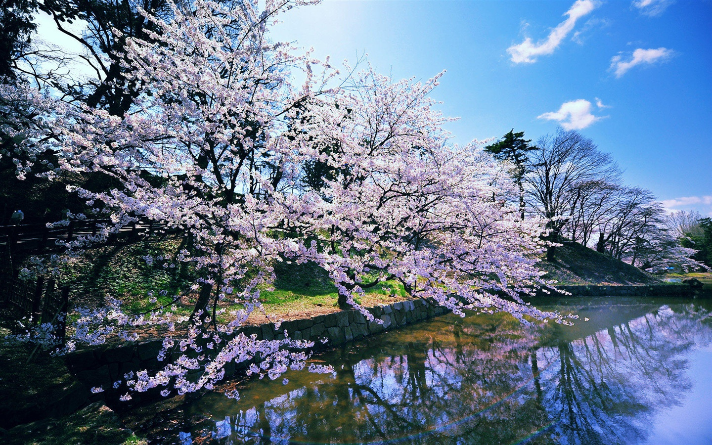 Japanese cherry blossoms wallpaper - 1440x900