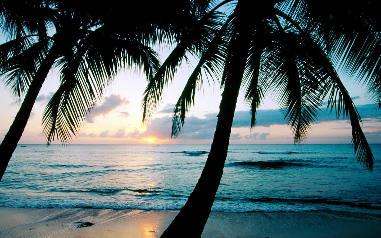 берег пальма море солнце пляж  № 3779840 бесплатно