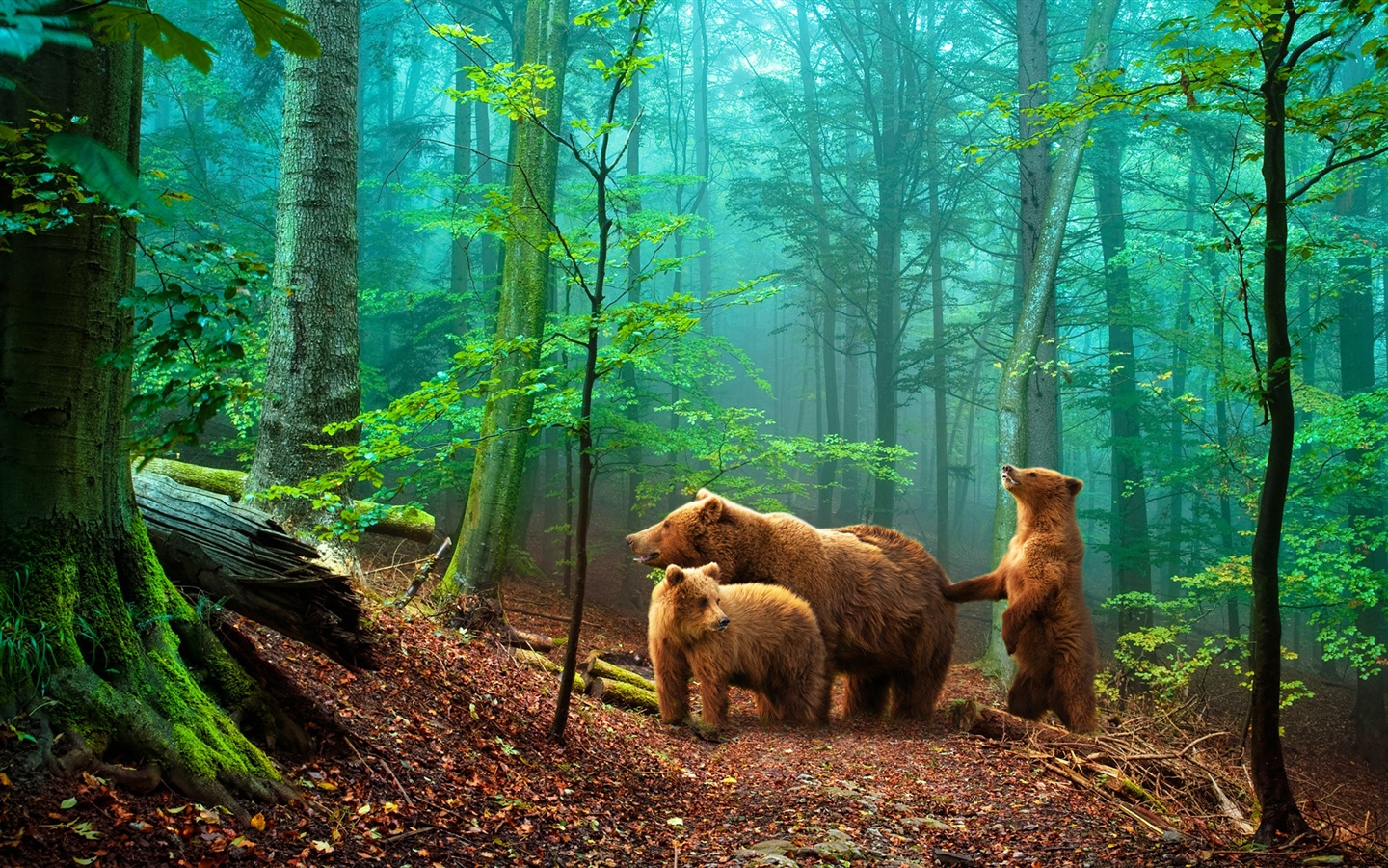 Brown bears in the forest wallpaper - 1440x900