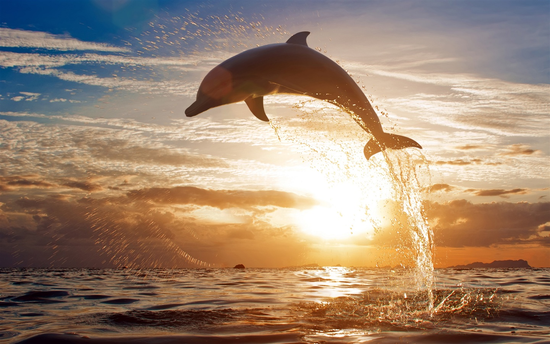Download Wallpaper 1440x900 Splashing sea waves of ...