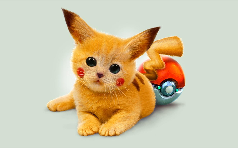 1920x1080 full hd 2k - Cute kittens hd images ...