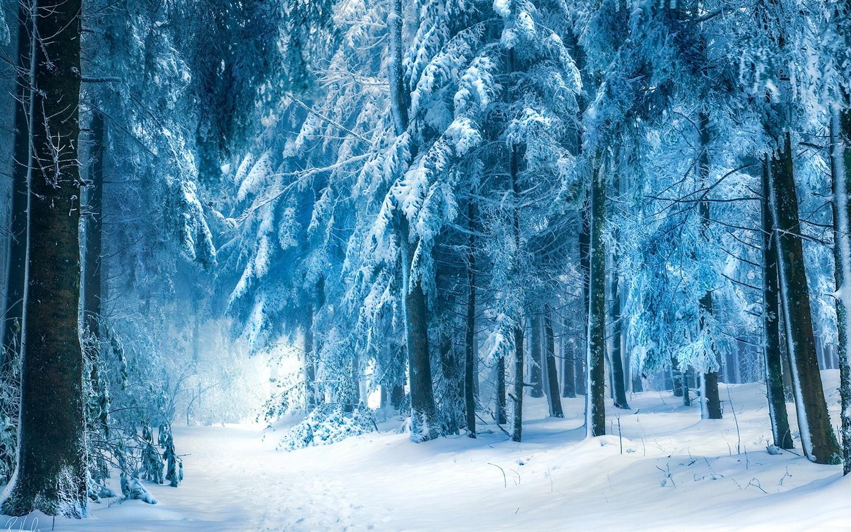 Snow Wallpapers 1920x1080 Full Hd: 壁紙 冬の風景、雪の森 1920x1200 HD 無料のデスクトップの背景, 画像