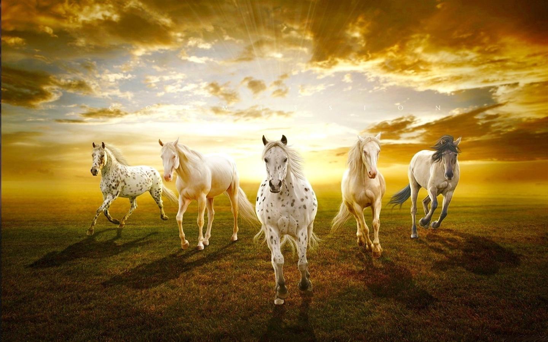 Fonds D U0026 39  U00e9cran Les Chevaux Blancs Dans La Prairie Coucher