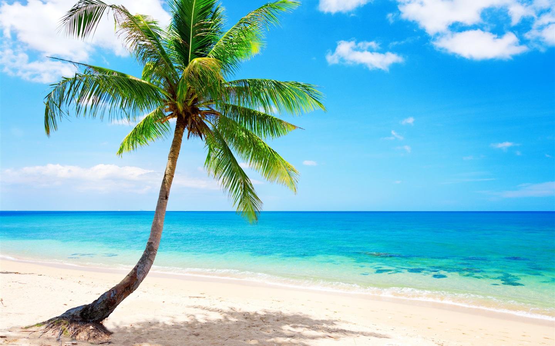 Tropical Paradise Beach Coast Sea Blue Emerald Ocean Palm: 壁紙 孤独なヤシの木、トロピカル、浜、海岸、海 2560x1600 HD 無料のデスクトップの背景, 画像