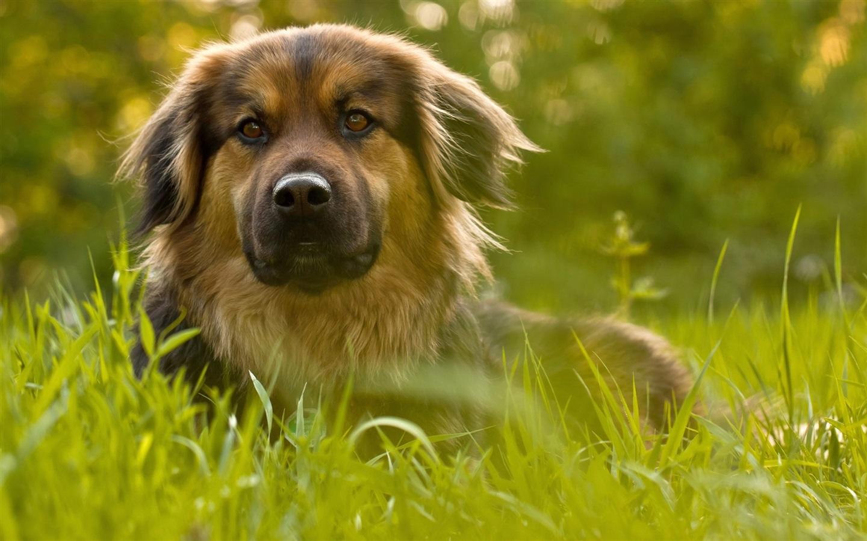 狗,綠色,草,�...