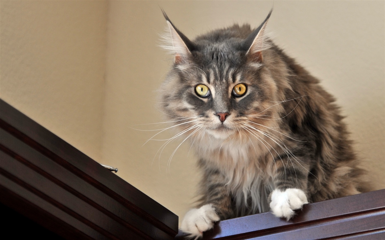 cute cat for 1440x900 - photo #15
