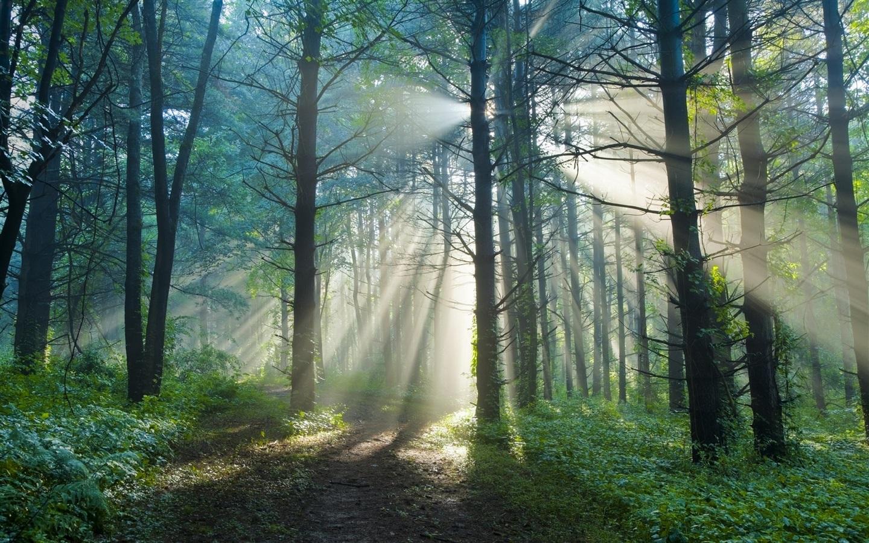 夏天的早晨,森林,步道,太阳光线 壁纸 - 1440x900图片