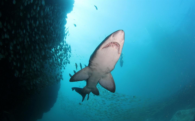 2560x1600 ocean sharks - photo #32
