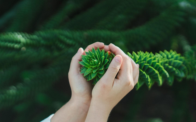 手,灌木,绿叶 壁纸图片