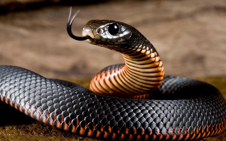 做梦梦到蛇是什么意思_做梦梦到很大一条花蛇是什么意思